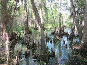 Even the haunted parts of the swamp were quite lovely,