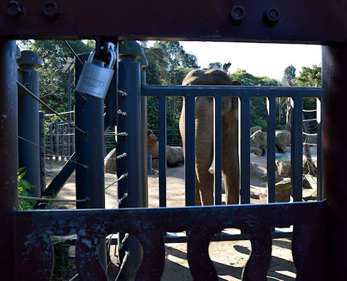 I don't like to see very large animals in inner city zoos. I know to kids love to see the elephants- but this, to me is a sad picture.